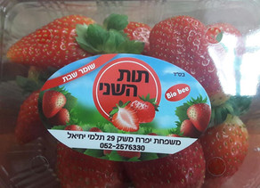 Katif Tut Shani – Strawberry Picking