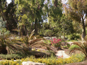 The Jerusalem Botanical Gardens