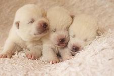 Hakufumy Puppies