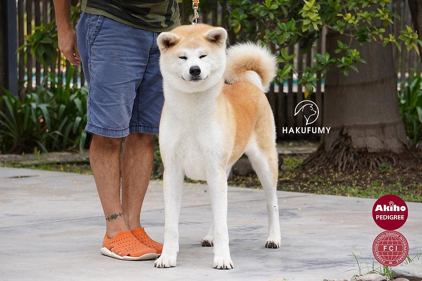 Haori Go Hakufumy