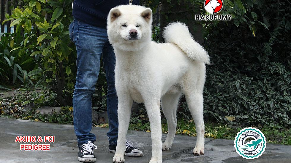 Aosora Go Hakufumy