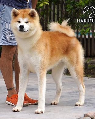 Emu Hakufumy