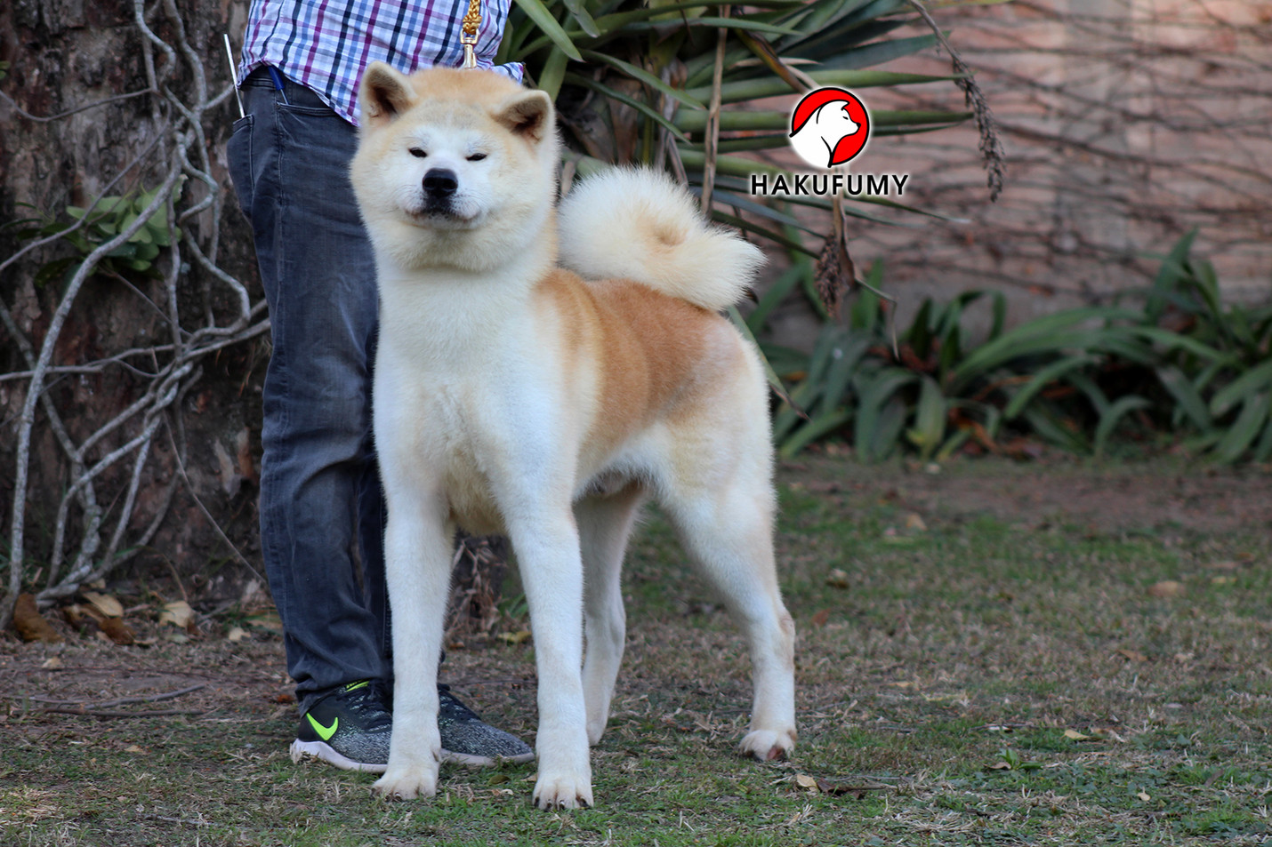 Arashi1.jpg