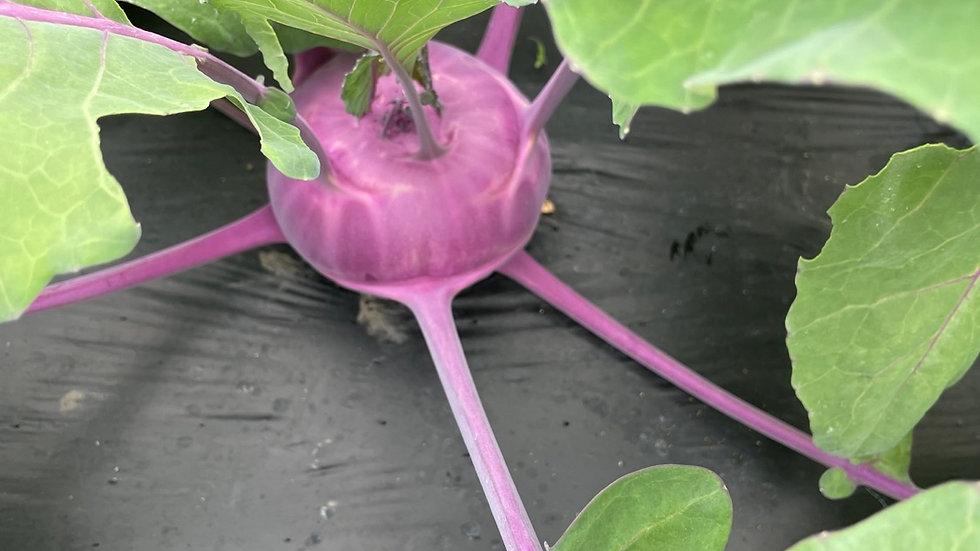 Colrave violette Bio GRTA pce