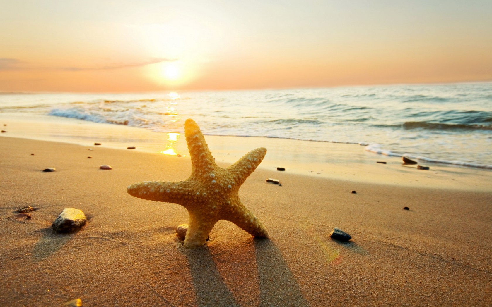 Make a Wish on a Starfish