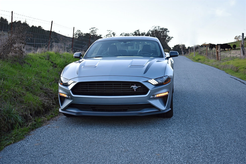 Mustang%20front_edited.jpg