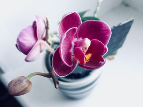 Happy National Orchid Day!