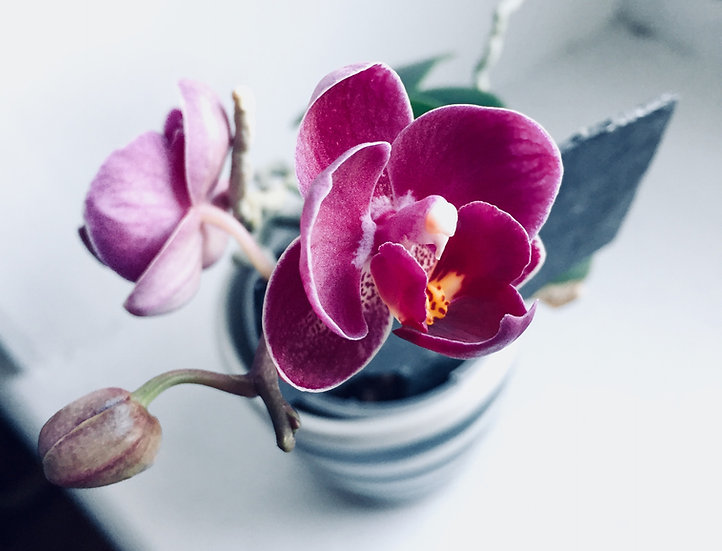 Fresh Water and Orchid
