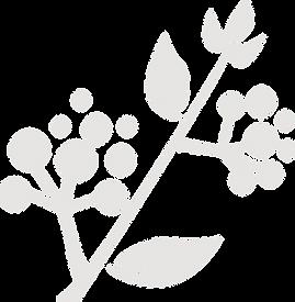 ramo grigio.png