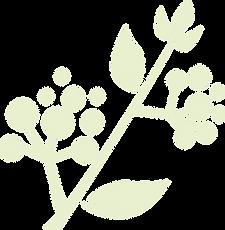 ramo verde.png