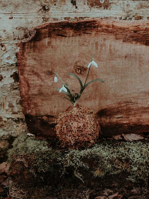 pexels-flora-westbrook-3761139.jpg
