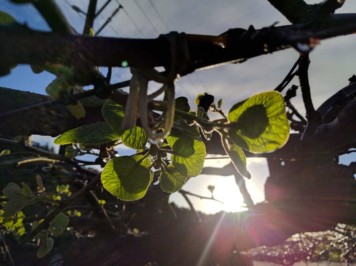 Sun and kiwifruit