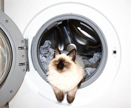 How Often Should You Clean Your Washing Machine?
