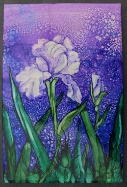 Irises at Dusk