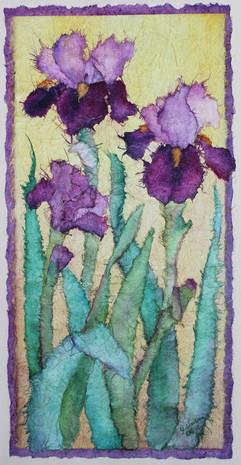 Irises in Contrast