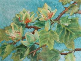 Tulip Tree Blossoms - Magnolia's Cousin