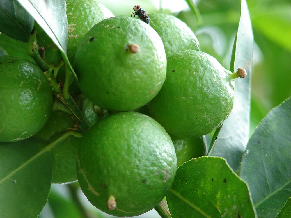 Key lime exotic caipirinha
