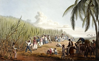 The origin of Cachaça and Sugarcane