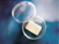 chondrotissue, Knorpelimplantat, Kollagen