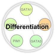 Differentiation.jpg