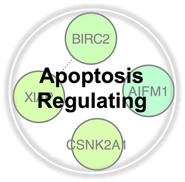 Apoptosis Regulating.jpg