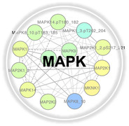 MAPK.jpg