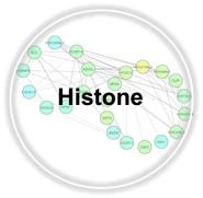 Histone.jpg