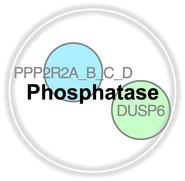Phosphatase.jpg