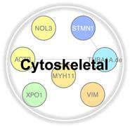 Cytoskeletal.jpg