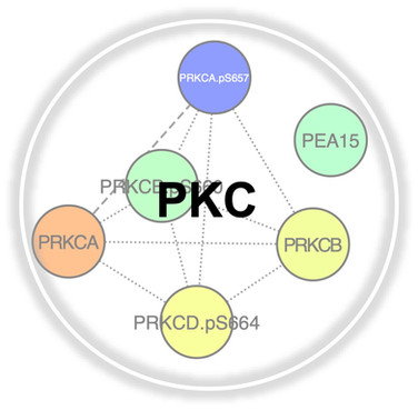 Pkc.jpg