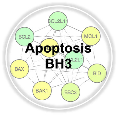 Apoptosis BH3.jpg