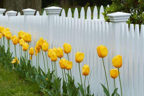 spring gate.jpg