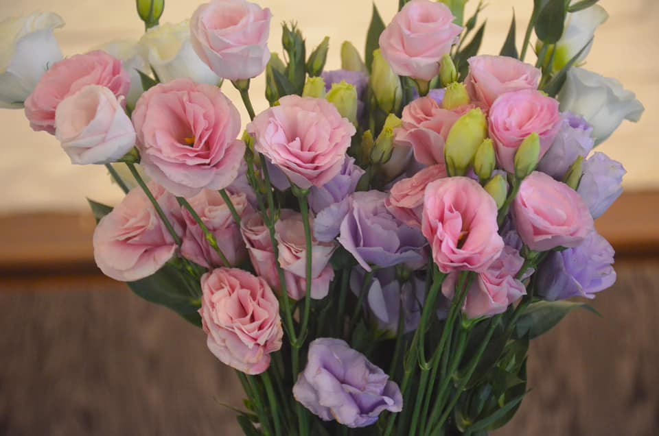 Imported Lisianthus