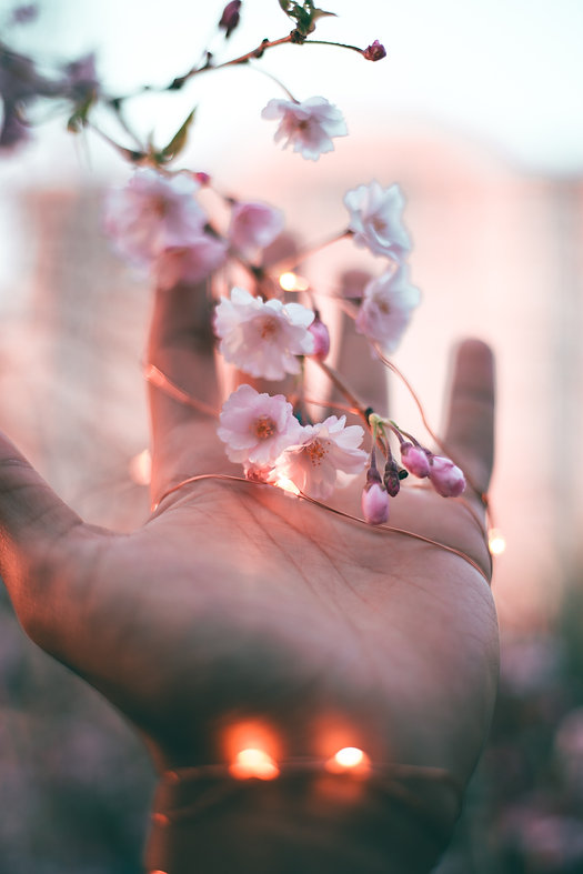 pink-petaled-flower-2814310.jpg