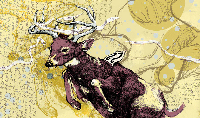 deer0024.jpg