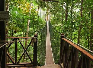 Canopy-Walk-Malaysia.jpg