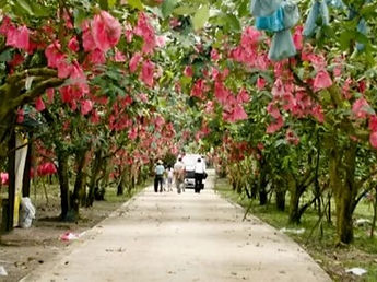 Desaru-Fruit-Farm-Tour_edited.jpg