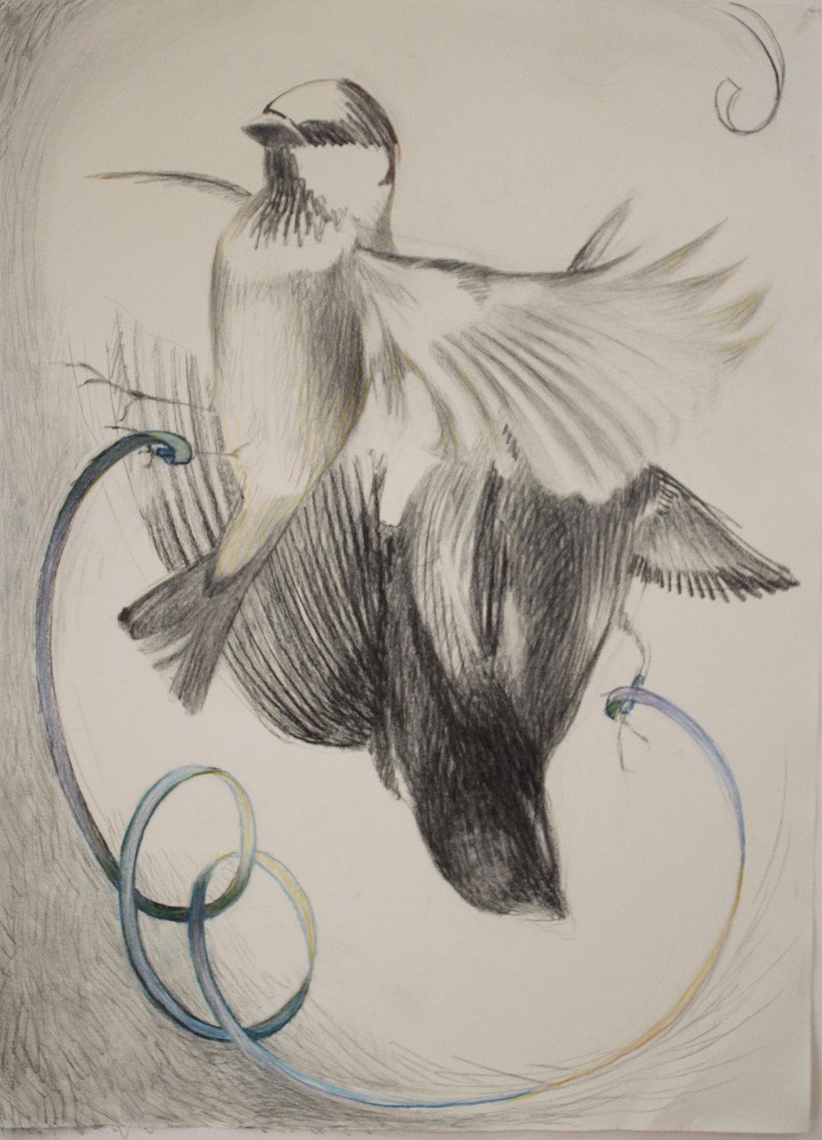 Birds with Ribbon
