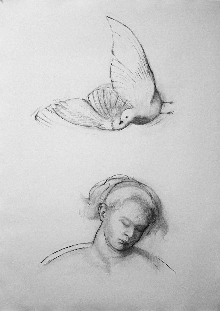 Dream with Dove