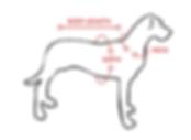 dog-diagram.png