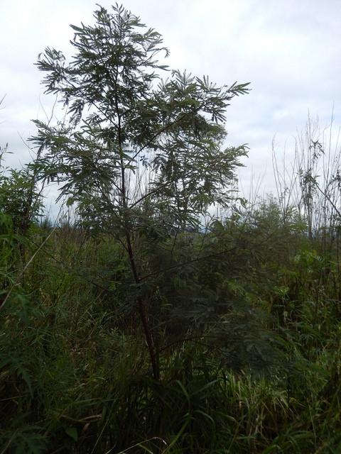 Área Florestal