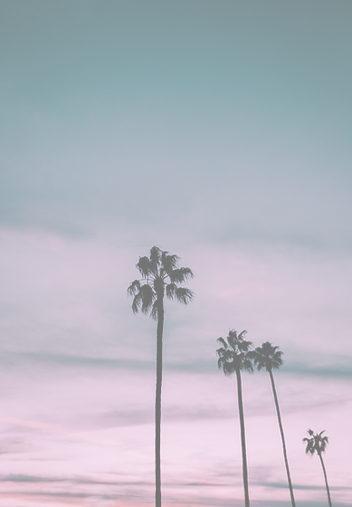 Palm trees pink sunset