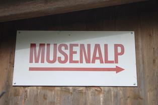 Besuch in der Alpkäserei Musenalp Isenthal