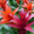 Plant Care Questions bromeliad fallen over