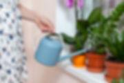 Indoor Plant Maintenance tips consistent watering