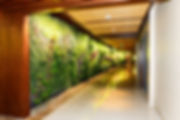 Benefits of Hotel Indoor Plants plant wall
