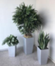 commercial-indoor-plant-service-Ontario