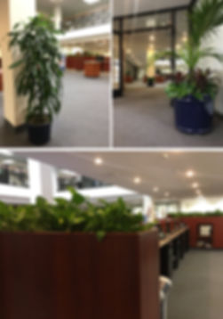 Biophilic design benefits Chino Commercial Inside Plants