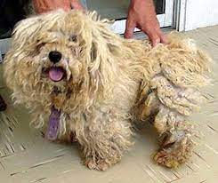 Matted dog.jpg
