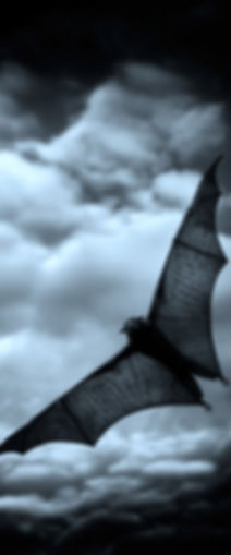Professional Bat Removal in Columbia SC, Bats in attic, Get Bats out, Live Bat trapping, Columbia SC Bat Control